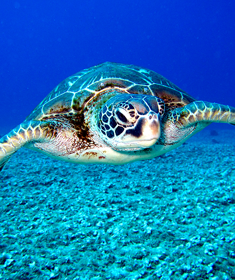 tours sea turtle